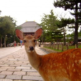 奈良公園近くのデイサービス*アットホームで親しみやすい♪